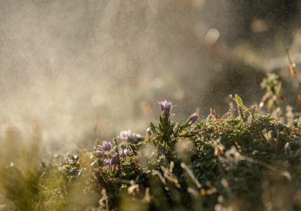 Vízpermet az érintetlen természetben, Ausztria